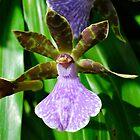 Purple Majesty by Penny Smith