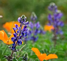 California wildflowers by Celeste Mookherjee