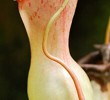 Deadly Pitcher by Penny Smith