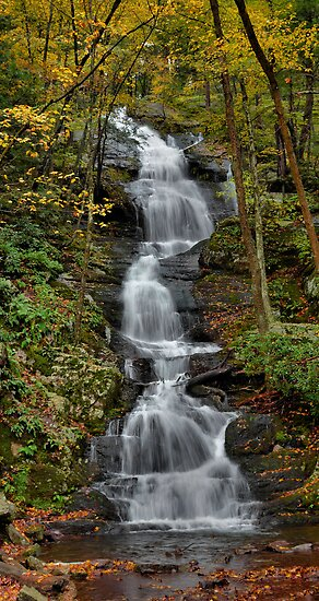 Forest Waterfall In Autumn by Stephen Vecchiotti