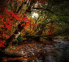 In His Glow by Charles & Patricia   Harkins ~ Picture Oregon