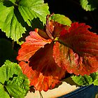 Strawberry leaf in Autumn by Gilberte