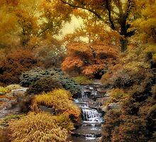 Japanese Rock Garden by Jessica Jenney