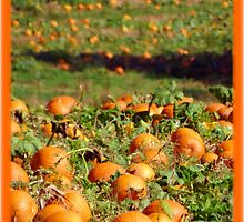 Pumpkin Patch  by Stacy Brooks Photography