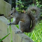 Squirrel Eating Grass! by Patricia Mills