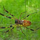 Colorful Spider by Patricia Mills