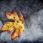 Maple Leaf by Keri Harrish