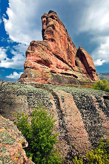 rock beauty  by plamenx