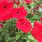 Four Red Flowers by Lunatasha