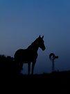 Australian Stock Horse by Penny Kittel
