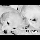 Bonding Buddies by Leigh Kerr
