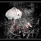 Shroom by Imago-Mortis