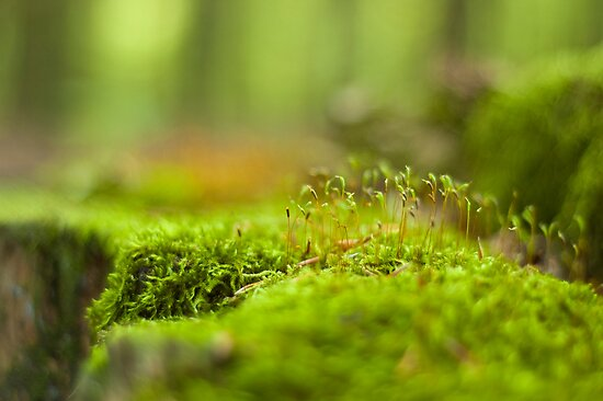 Green moss close-up by Magdalena Warmuz-Dent