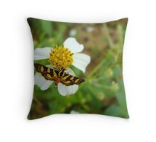 Syngamia florella:  A  DAY FLYING MICROMOTH Throw Pillow