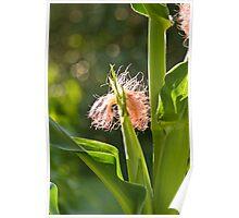 Corn Silk On The Stalk  Poster