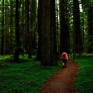Among the Redwoods by ZWC Photography