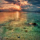 Starfish sunset by Christina Brunton