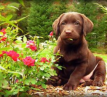 Jasper!  Stop eating the Roses! by DennisThornton