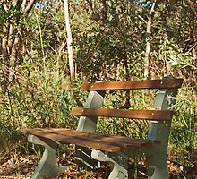 Bench in the Bush by kalaryder