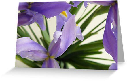 Karyn Crimmin's 'Blue Irises' by Art 4 ME