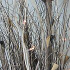 Karyn Crimmin's 'Brushwood' by Art 4 ME