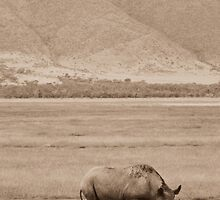 Rhino Curves ( Single Rhinoceros ) by emiliewho