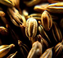 Fennel Seeds by missmoneypenny