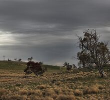 Cooma Countryside by yolanda