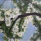 Branch of blooming Blossom by lizzyforrester