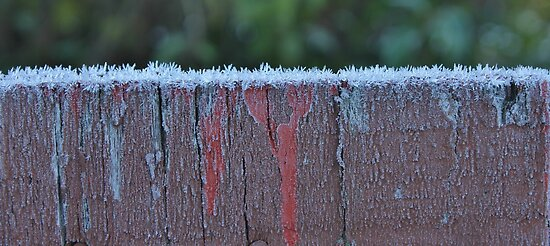 Frosted Fence by Stephen Thomas