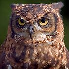 Eagle Owl Portrait by Keld Bach