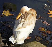 Peeking Duck by Monnie Ryan