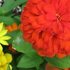 Bright Orange Zinnia by JennsTreasures
