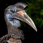 Ground-Hornbill Portrait by Keld Bach