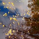 """Reflections of Fall"" by Deb  Badt-Covell"