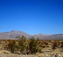 Desert Blues by marilyn diaz