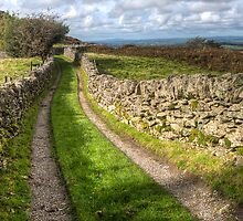 Country Lane by Adrian Evans