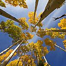 Aspen Color by Sue  Cullumber