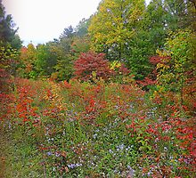 Sumac Hill in October by TrendleEllwood