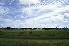 Hardee County Back Roads by Laurie Perry