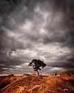 The Tree by Mieke Boynton