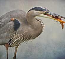 Catch of the day by Heather King