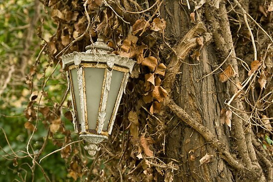 Old Lamp Hanging On Tree by Kuzeytac