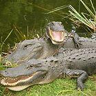 Gator Family 2 by 1EddiejrAlvarez