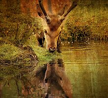 Deer Oh deer, do I look that old? by Alan Mattison IPA