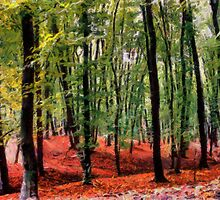 Deep Forest by DiNovici