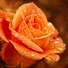 Autumn rose by Celeste Mookherjee
