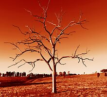 The Tree in Red by Arfan Habib