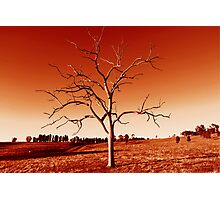 The Tree in Red Photographic Print