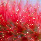 ~ delicate ~ by Lorraine Creagh